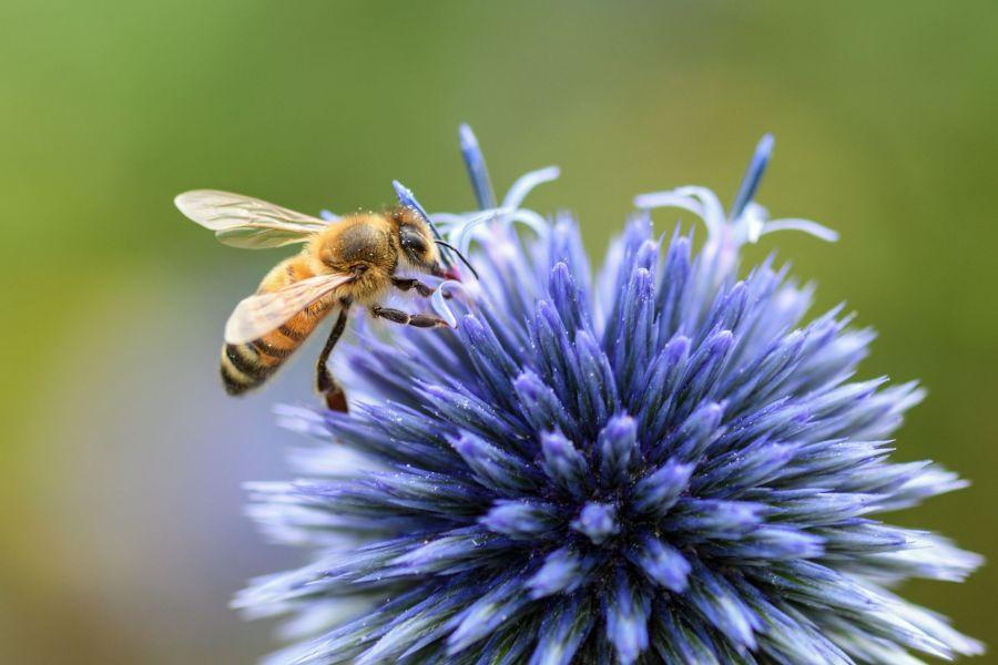 Hausbesuchspraxis Minden Biene 900